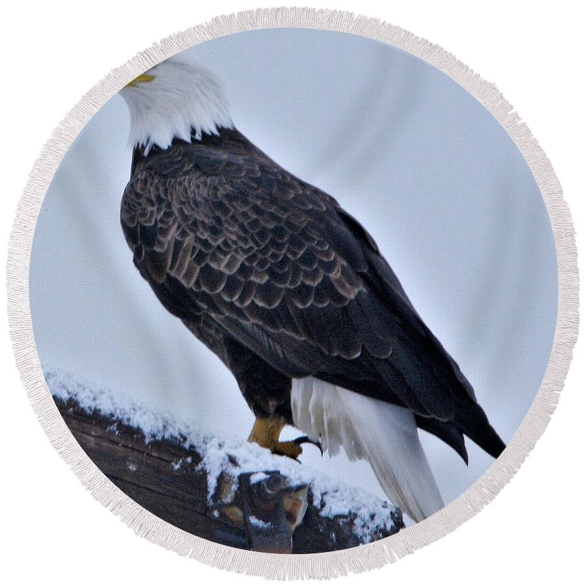 Adult Eagle Round Beach Towel featuring the photograph Eagle by John Adams