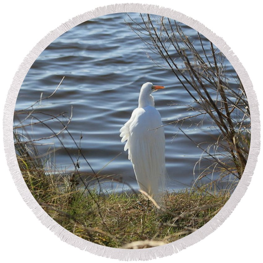 Egret Round Beach Towel featuring the photograph Egret by Janet Pugh