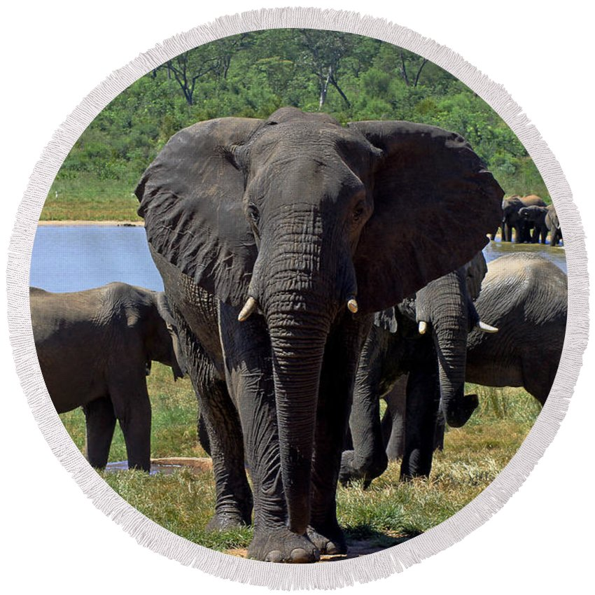 Elephant Round Beach Towel featuring the photograph Elephant by Tony Murtagh