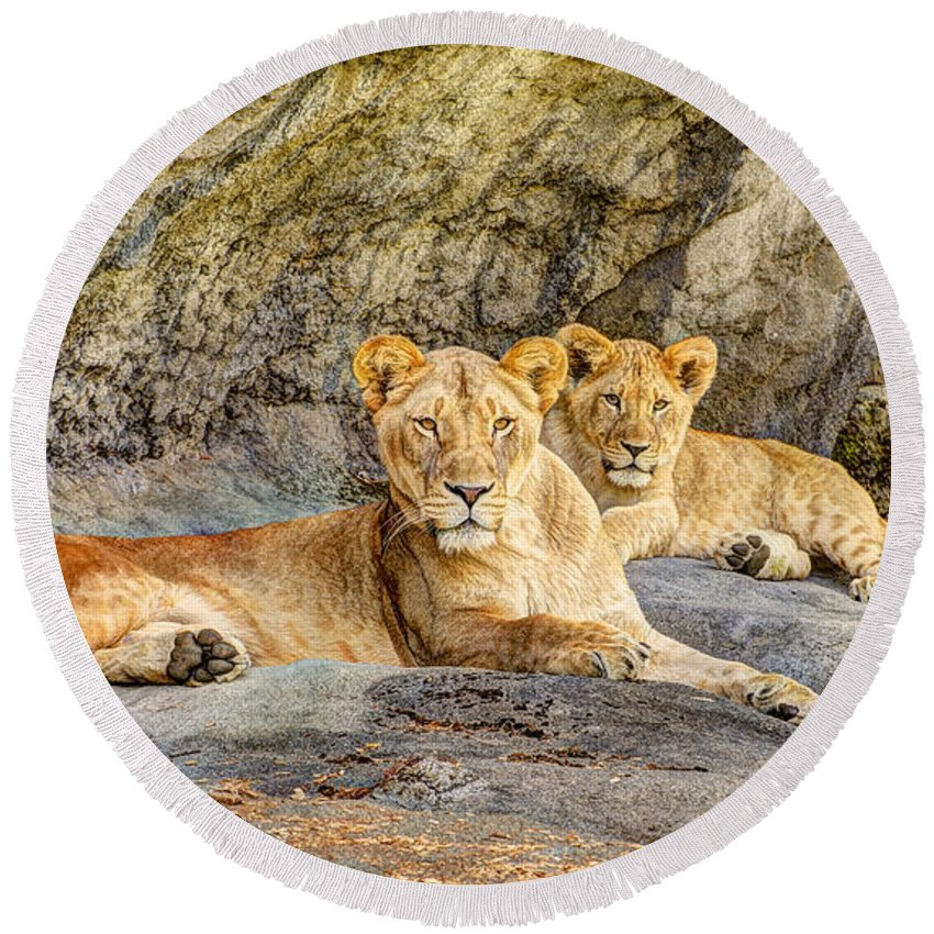 Adorable Round Beach Towel featuring the photograph Female Lion And Cub Hdr by Marv Vandehey
