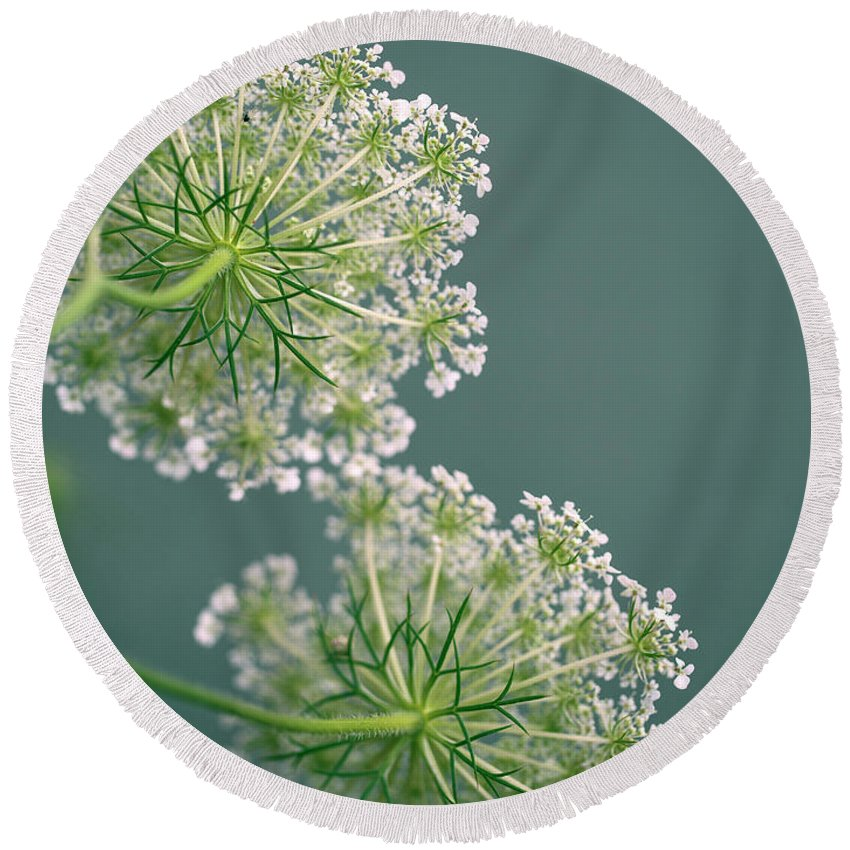Dill Round Beach Towel featuring the photograph Fragile Dill Umbels On Summer Meadow by Nailia Schwarz