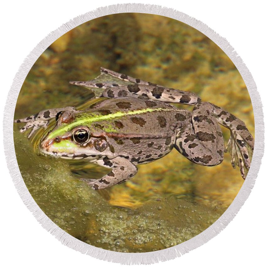 Frog Round Beach Towel featuring the photograph Frog by FL collection