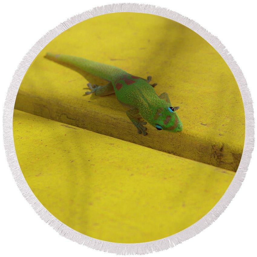 Gecko Yellow Picnic Table Maui Hawaii Round Beach Towel featuring the photograph Eye Spy by Carl Paulson