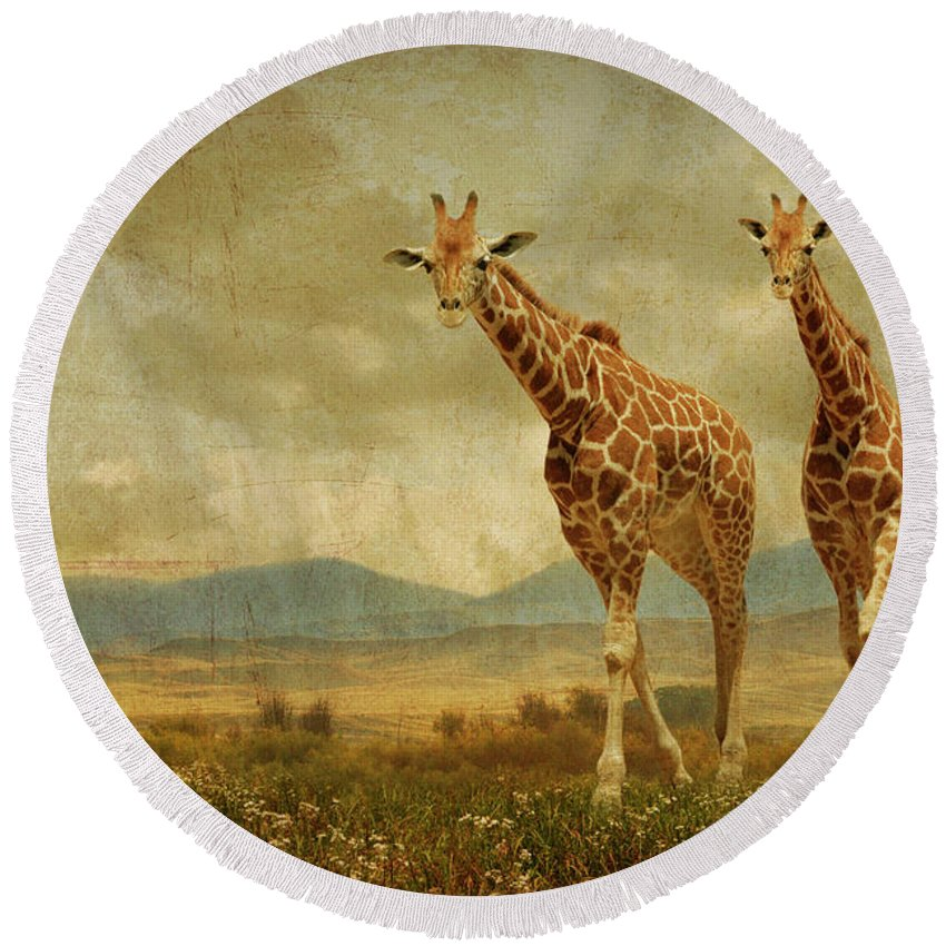 Giraffes Round Beach Towel featuring the photograph Giraffes In The Meadow by Guy Crittenden
