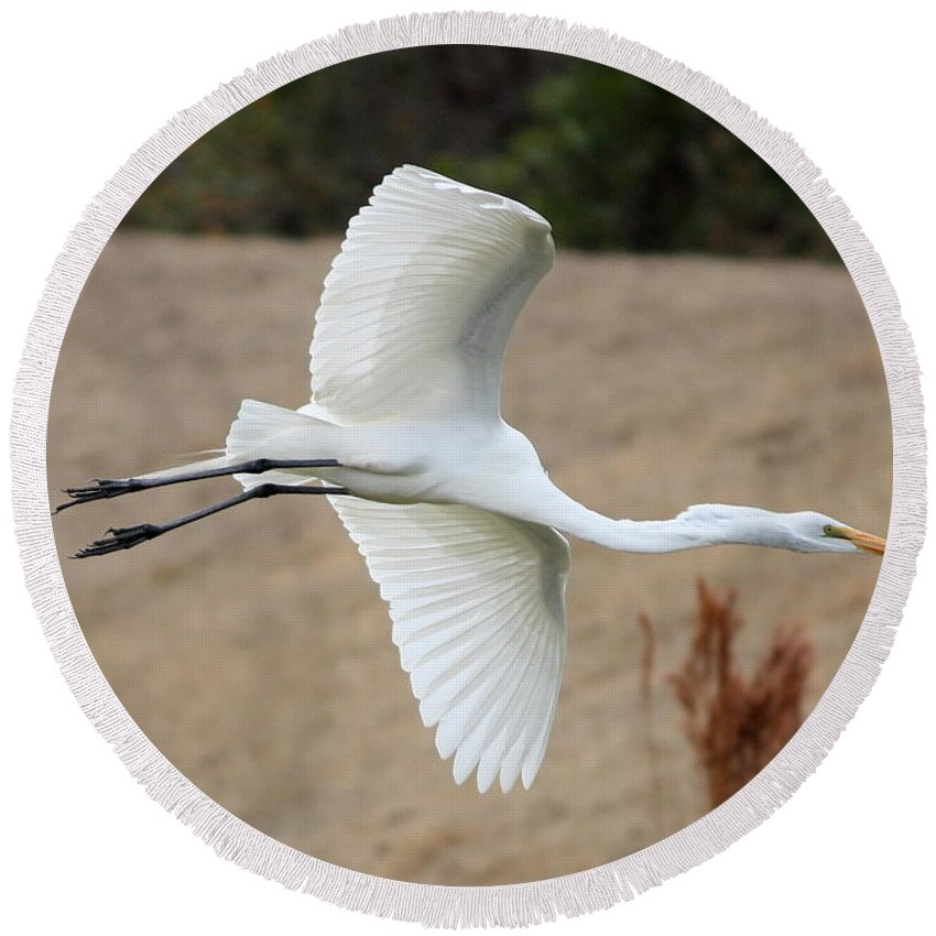 Egret Round Beach Towel featuring the photograph Gliding by Carol Groenen