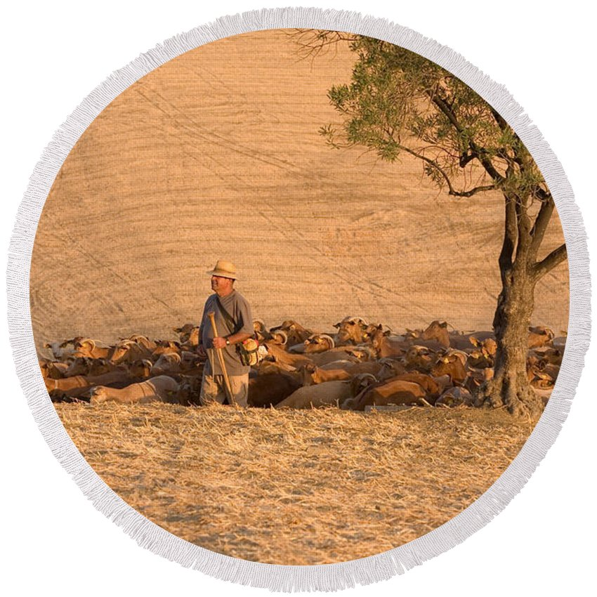 Goat Round Beach Towel featuring the photograph Goatherd by Mal Bray