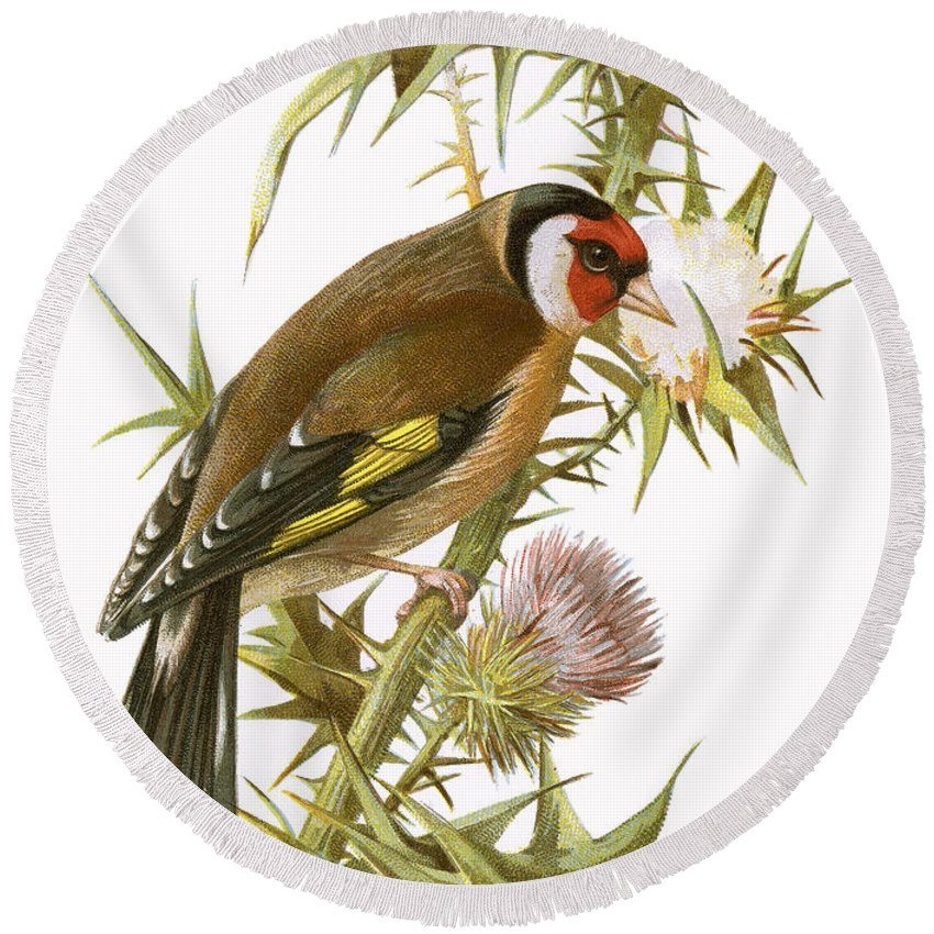 Finch Round Beach Towel featuring the painting Goldfinch by English School