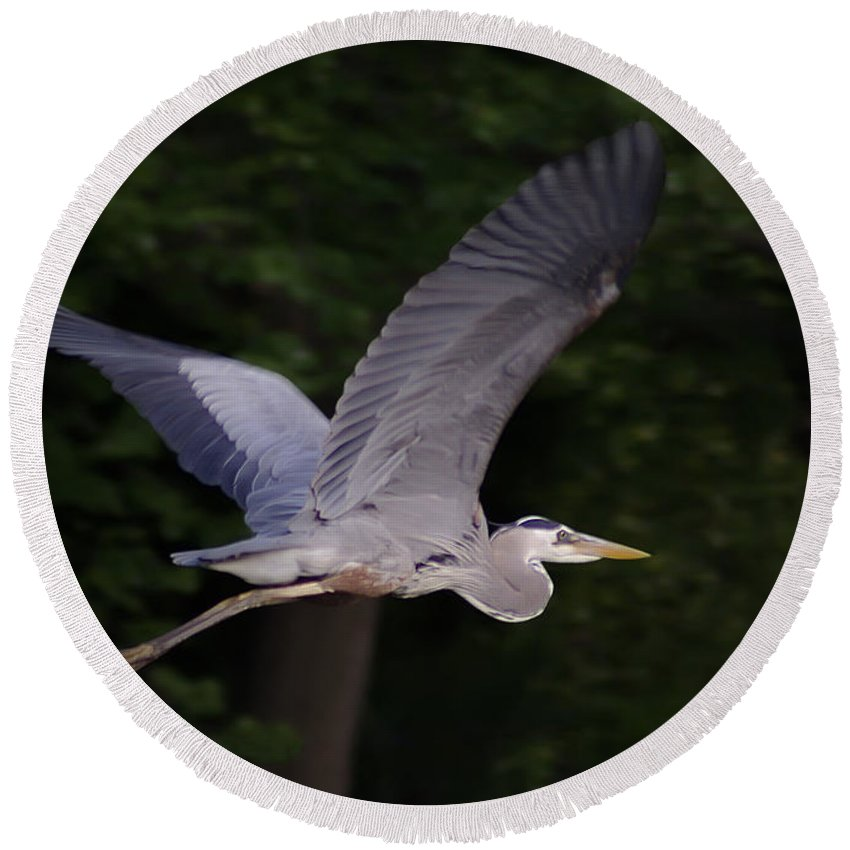 2d Round Beach Towel featuring the photograph Great Blue Heron In Flight by Brian Wallace