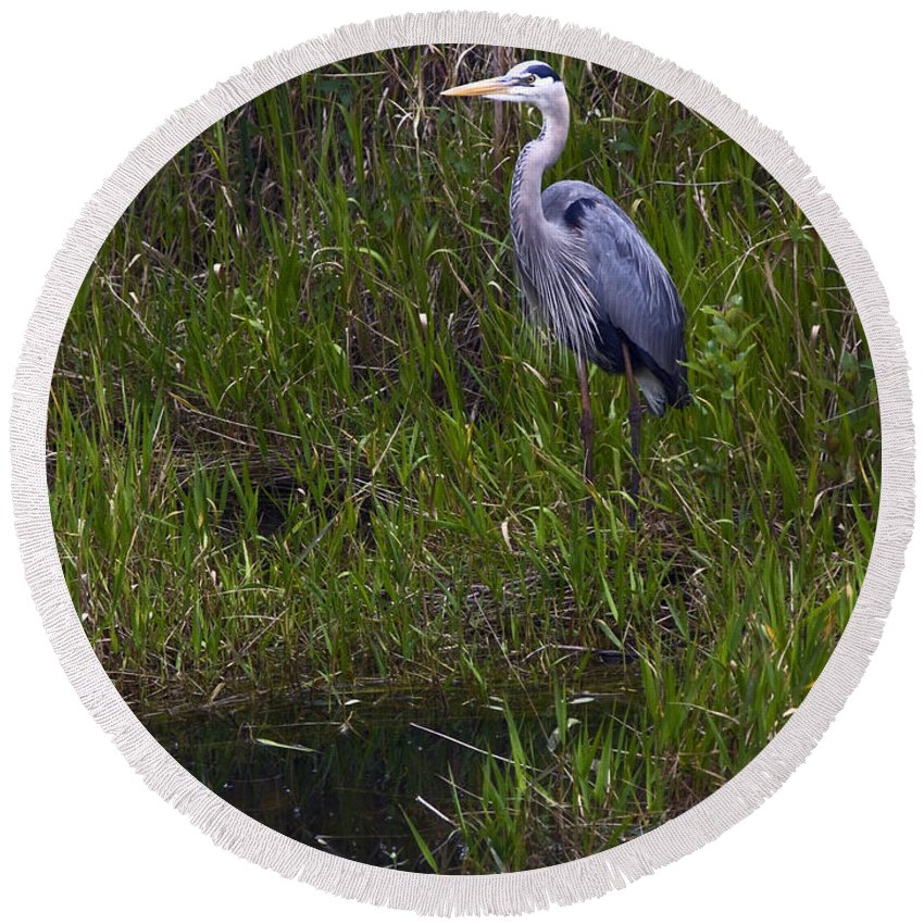 Great Blue Heron Round Beach Towel featuring the photograph Great Blue Heron by Sally Weigand