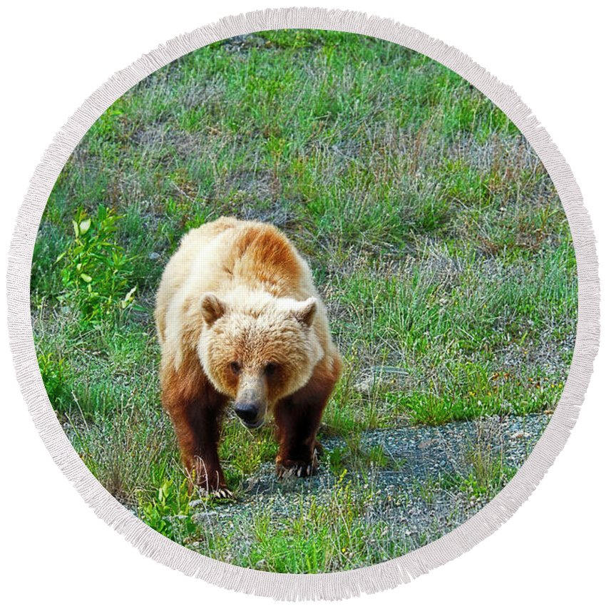 Grizzly Round Beach Towel featuring the photograph Grizzly by David Arment