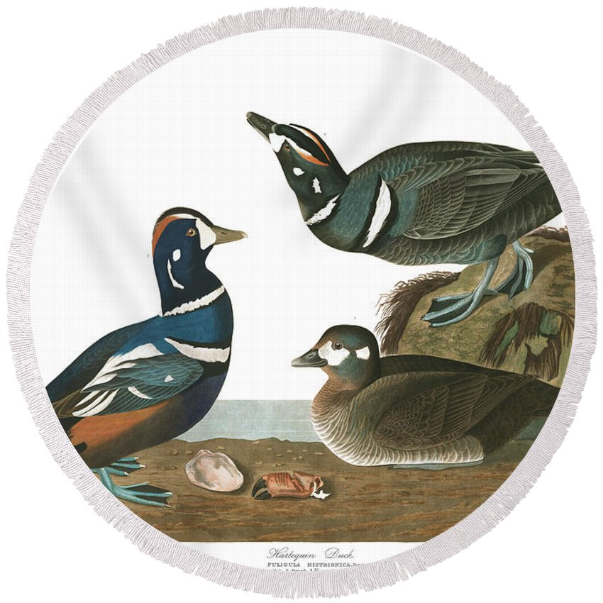 Harlequin Duck Round Beach Towel featuring the painting Harlequin Duck by John James Audubon