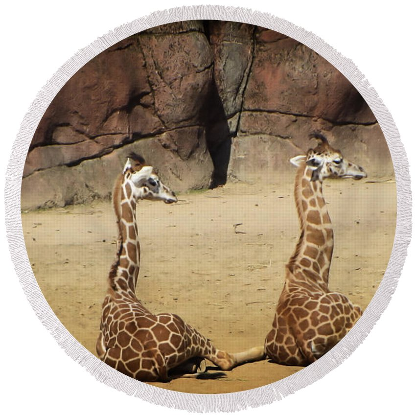 Africa Round Beach Towel featuring the photograph Having A Giraffe by Mickey At Rawshutterbug