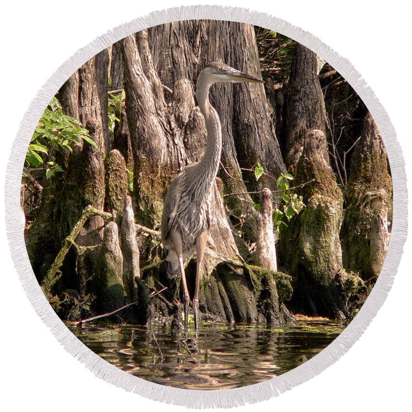 Great Blue Heron Round Beach Towel featuring the photograph Heron And Cypress Knees by Steven Sparks