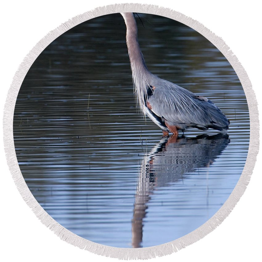 Great Blue Heron Round Beach Towel featuring the photograph Heron Reflection by Randall Ingalls