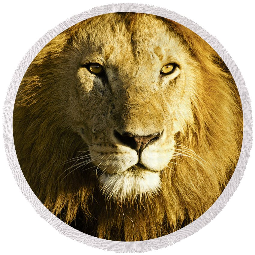 Lion Round Beach Towel featuring the photograph His Royal Highness 1 by Michele Burgess