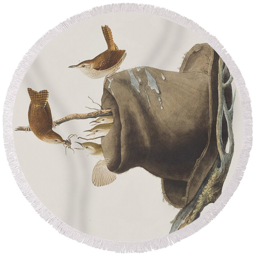 Wren Round Beach Towel featuring the painting House Wren by John James Audubon