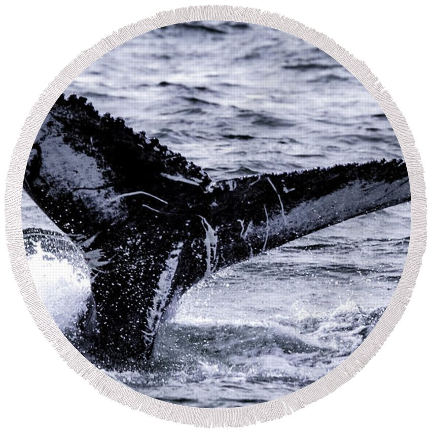 Adventure Round Beach Towel featuring the photograph Humpback Fluke by Pete Federico