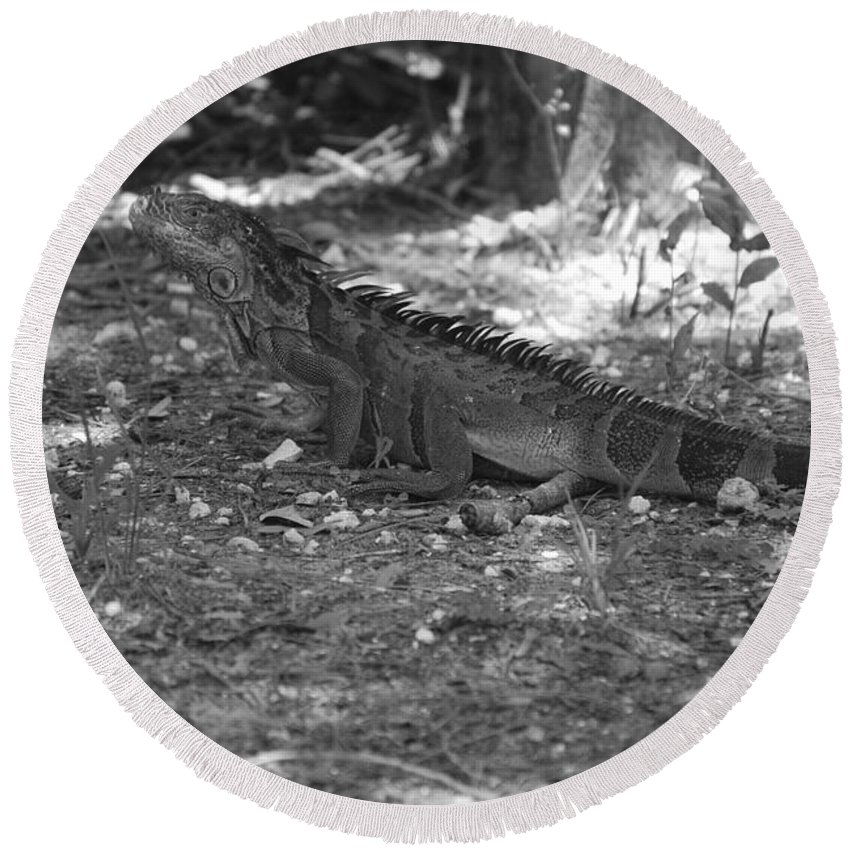 Black And White Round Beach Towel featuring the photograph I Iguana by Rob Hans