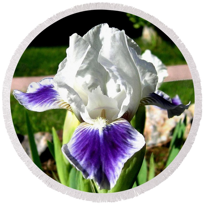 Iris Round Beach Towel featuring the photograph Iris Elegance by Will Borden