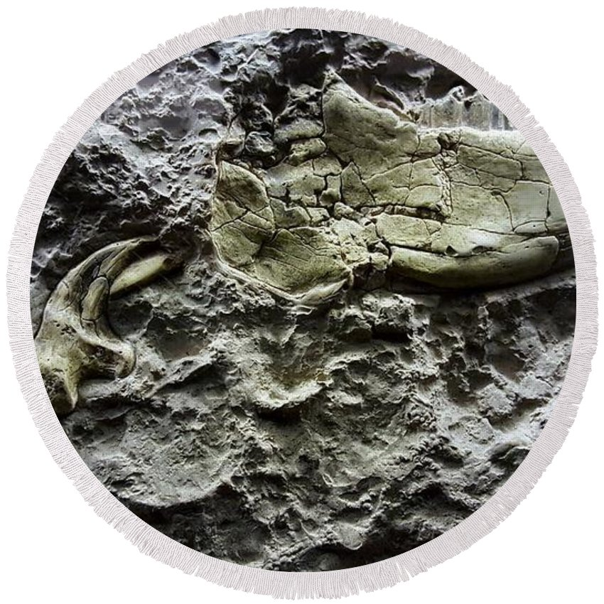 Fossil Round Beach Towel featuring the photograph Jaw Bone by Rob Hans