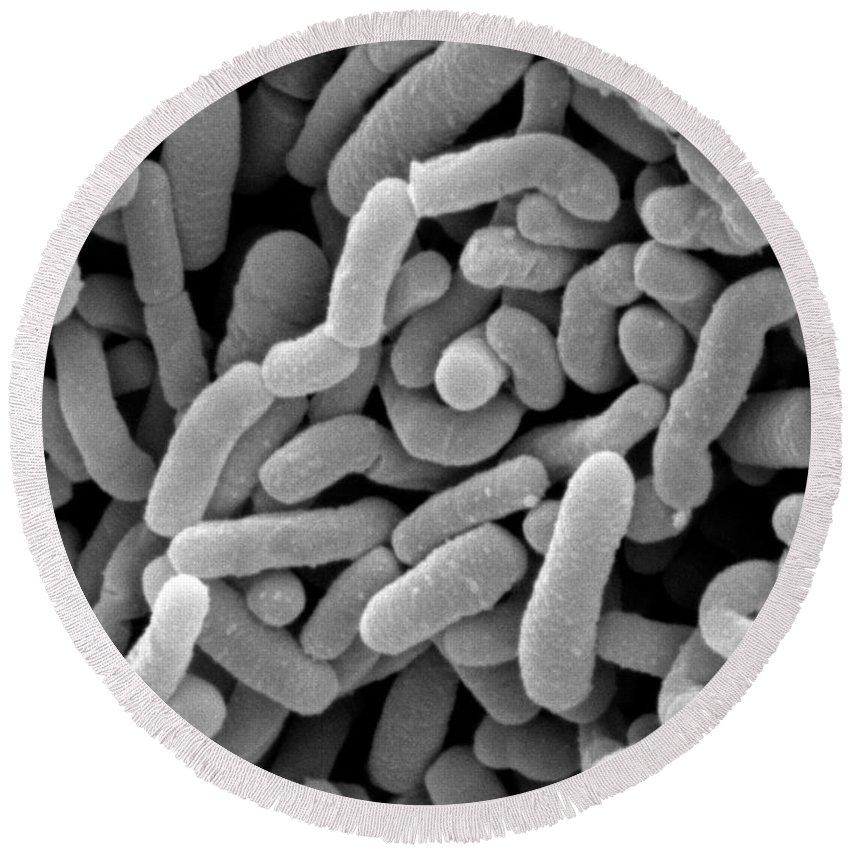 Lactobacillus Round Beach Towel featuring the photograph Lactobacillus Acidophilus And L. Casei by Scimat