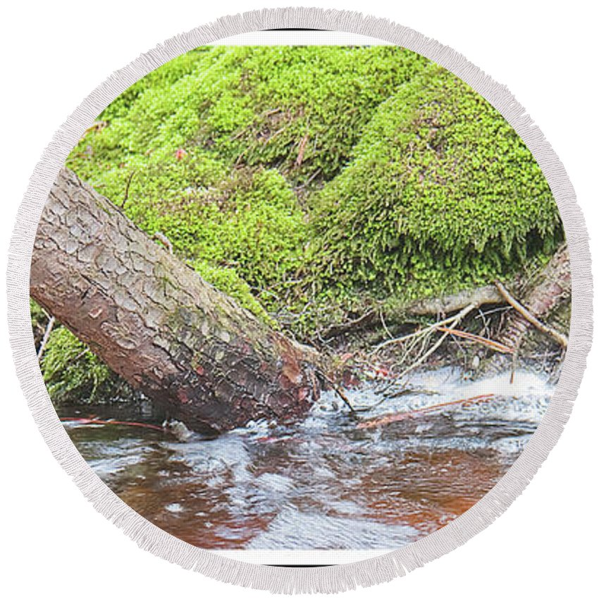 Tree Round Beach Towel featuring the photograph Leaning Tree Trunk By A Stream by A Gurmankin