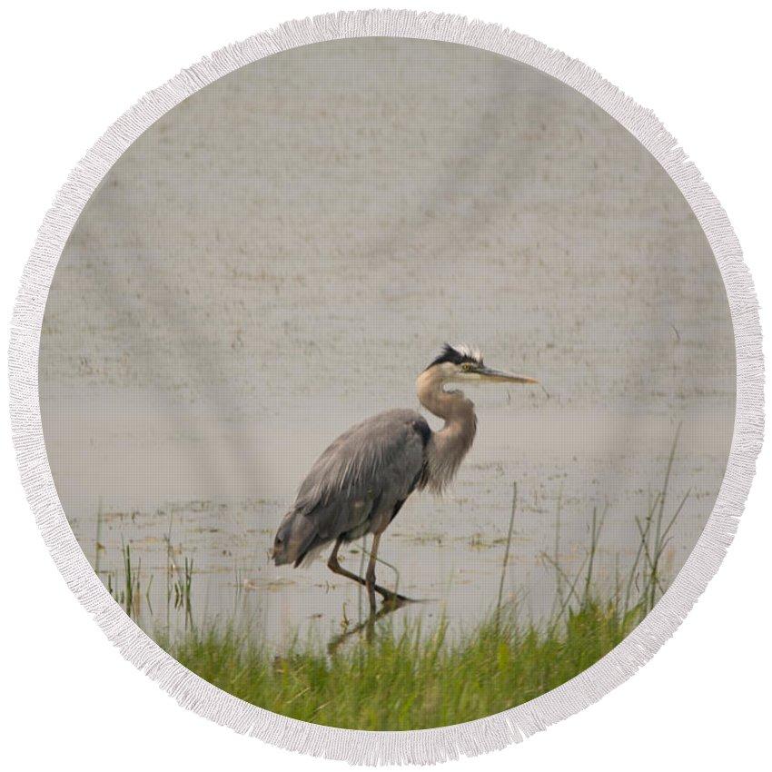 Great Blue Heron Round Beach Towel featuring the photograph Legs by Linda Kerkau