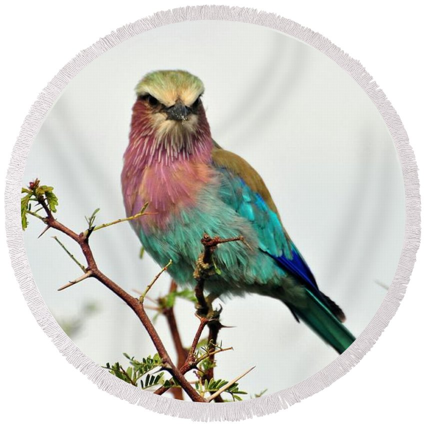 Lilac Breasted Roller Round Beach Towel featuring the photograph Lilac Breasted Roller by Kenneth Imler
