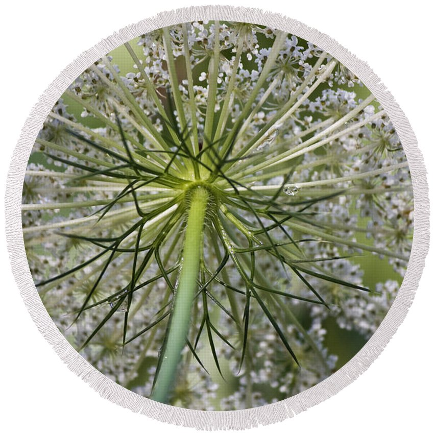 Queen Anne's Lace Round Beach Towel featuring the photograph Look Up by Teresa Mucha
