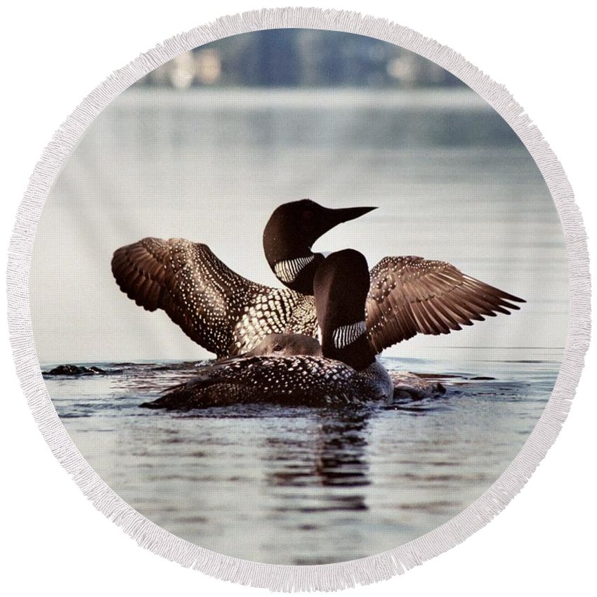 Common Loon Round Beach Towel featuring the photograph Loon Family by Sandra Huston