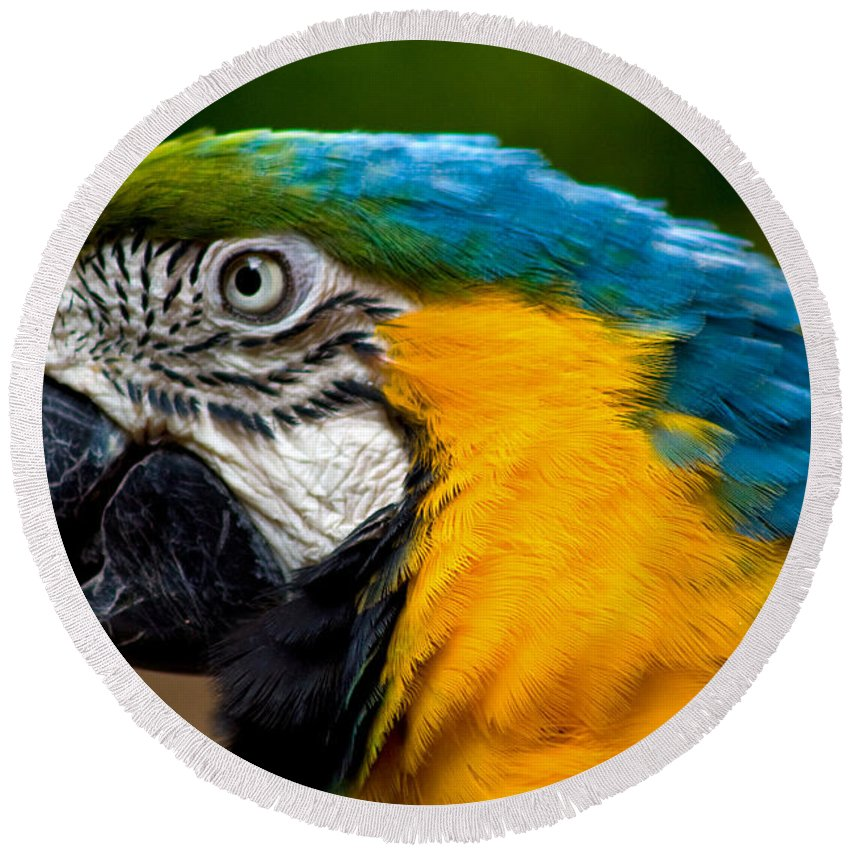 Macaw Round Beach Towel featuring the photograph Macaw by Thomas Marchessault