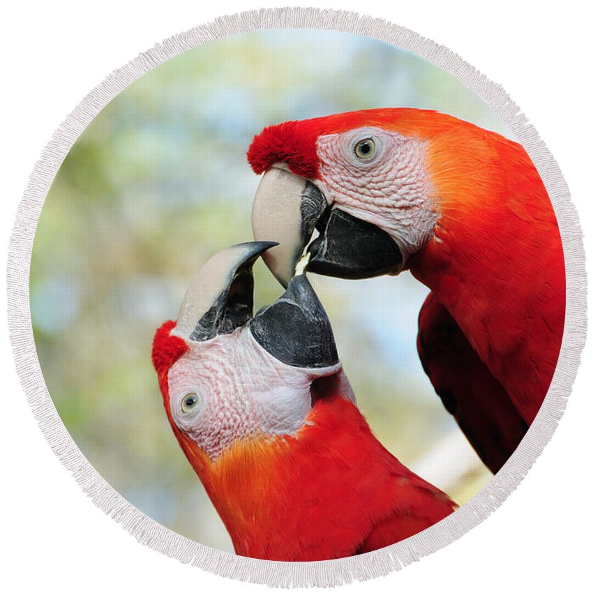 Bird Round Beach Towel featuring the photograph Macaws by Steven Sparks