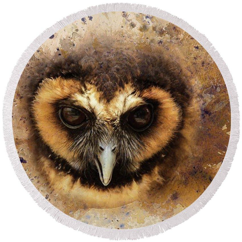 Malaysian Brown Wood Owl Round Beach Towel featuring the photograph Malaysian Brown Wood Owl by Eva Lechner