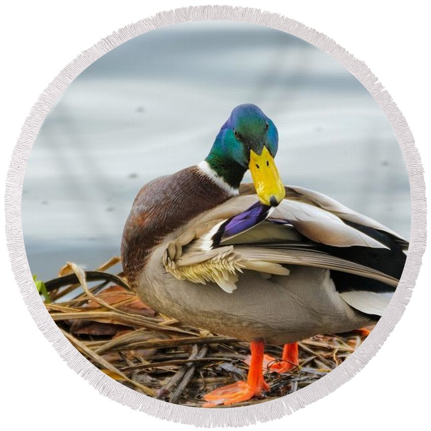 Ducks Round Beach Towel featuring the photograph Mallard by FL collection