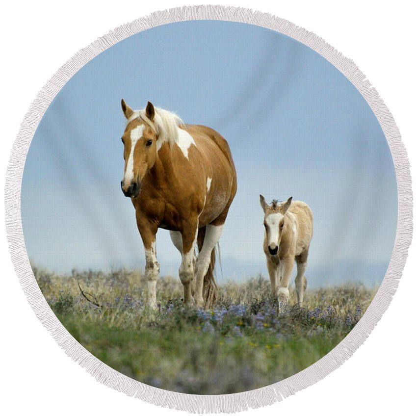 Horse Round Beach Towel featuring the photograph Mare And Foal by Out West Originals