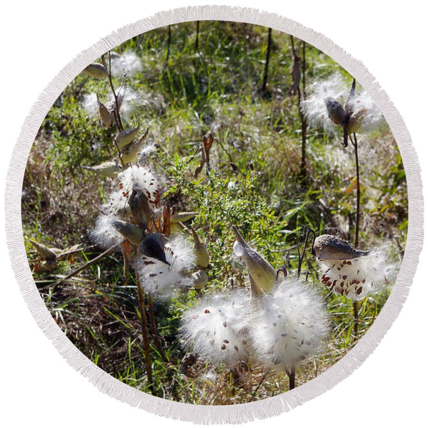 Flora Round Beach Towel featuring the photograph Milkweed by Scimat