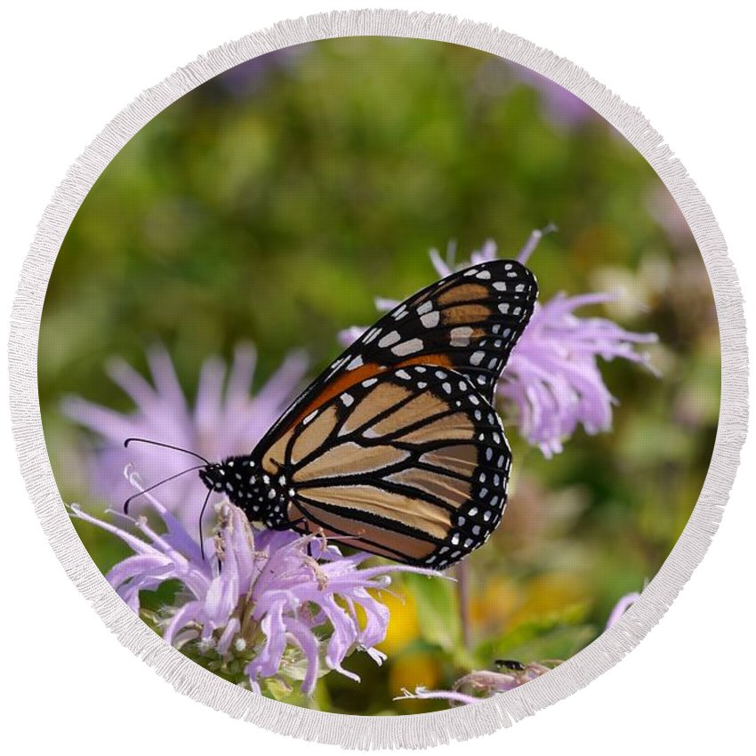 Tiwago Round Beach Towel featuring the photograph Monarch by Photography by Tiwago