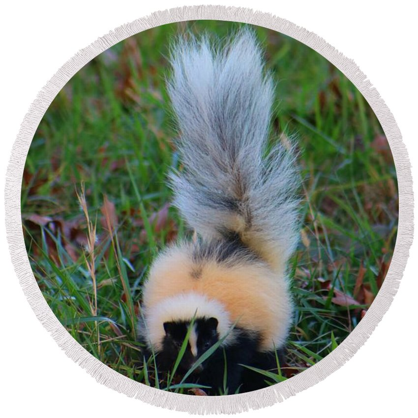 Skunk Round Beach Towel featuring the photograph Mostly White Skunk by Kathryn Meyer