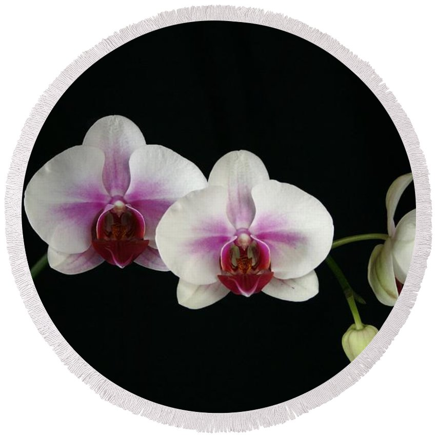 Moth Round Beach Towel featuring the photograph Moth Orchid 3 by Marna Edwards Flavell