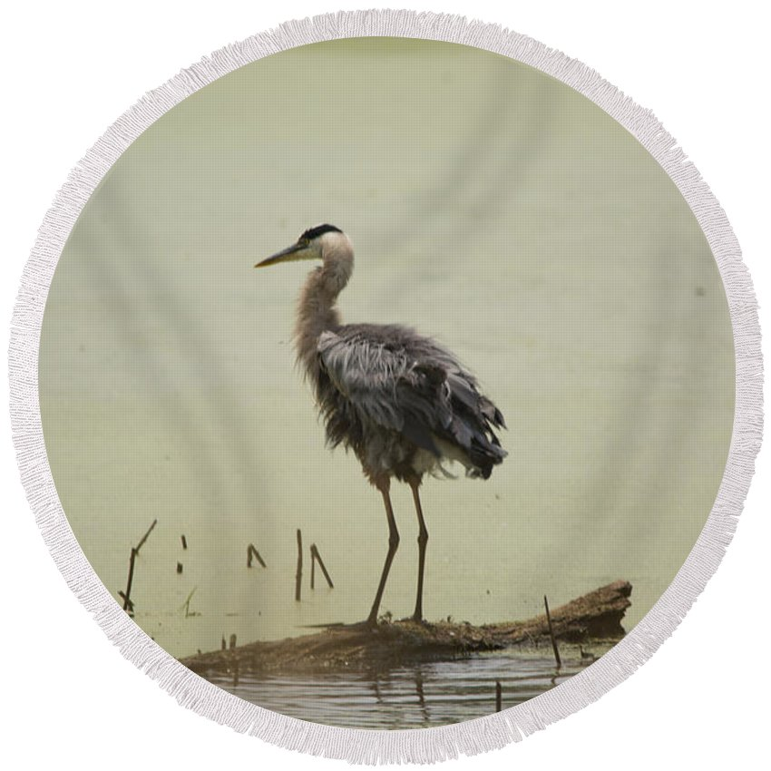 Great Blue Heron Round Beach Towel featuring the photograph On A Log by Linda Kerkau