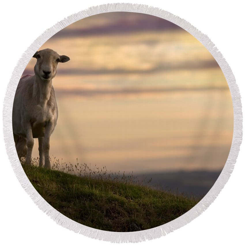 Sheep Round Beach Towel featuring the photograph On The Top Of The World by Angel Ciesniarska