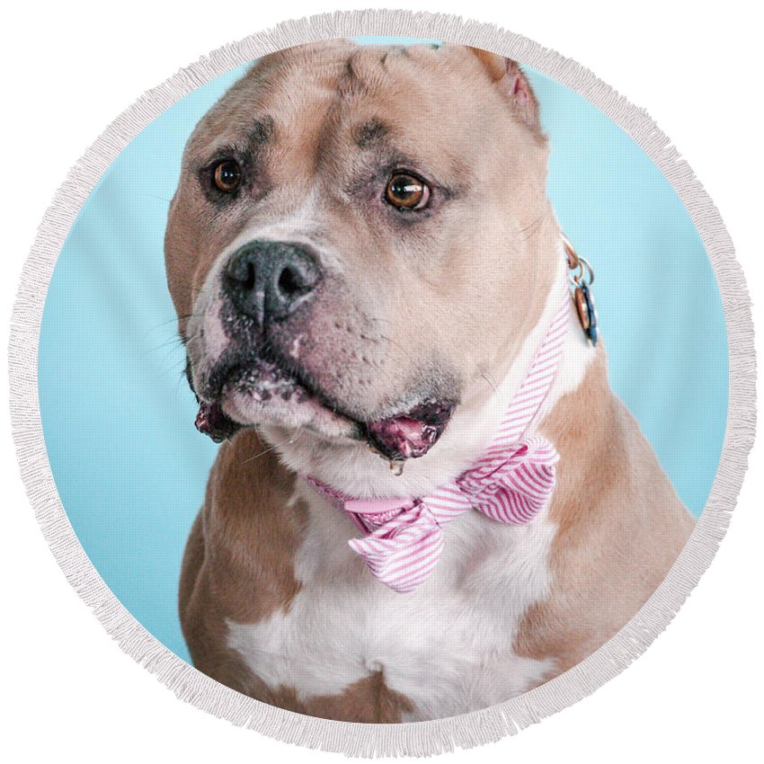 Dog Round Beach Towel featuring the photograph Ophelia 4 by Pit Bull Headshots by Headshots Melrose