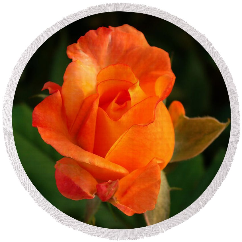 Rose Round Beach Towel featuring the photograph Orange Rose by Sandy Keeton