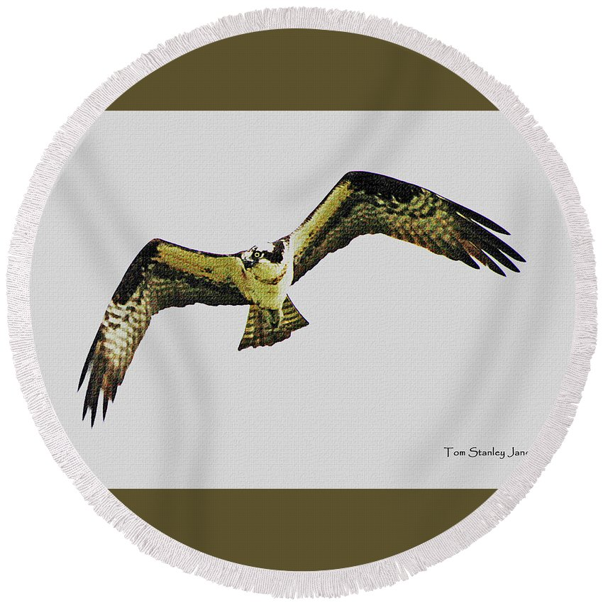 Osprey Looking For Lunch Round Beach Towel featuring the digital art Osprey Looking For Lunch by Tom Janca