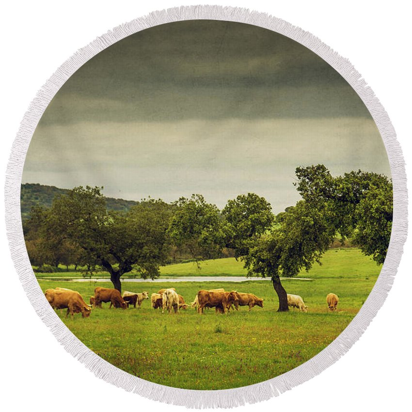 Portugal Round Beach Towel featuring the photograph Pasturing Cows by Carlos Caetano