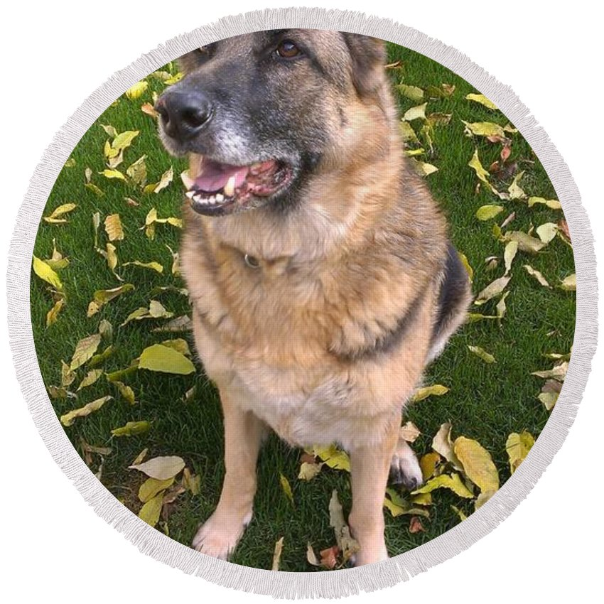 German Shepherd Round Beach Towel featuring the photograph Patiently Waiting by LKB Art and Photography