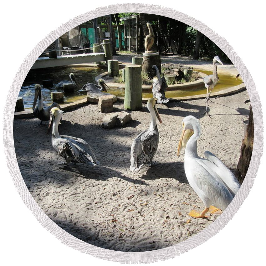 Pelican Round Beach Towel featuring the photograph Pelicans by Frederick Holiday