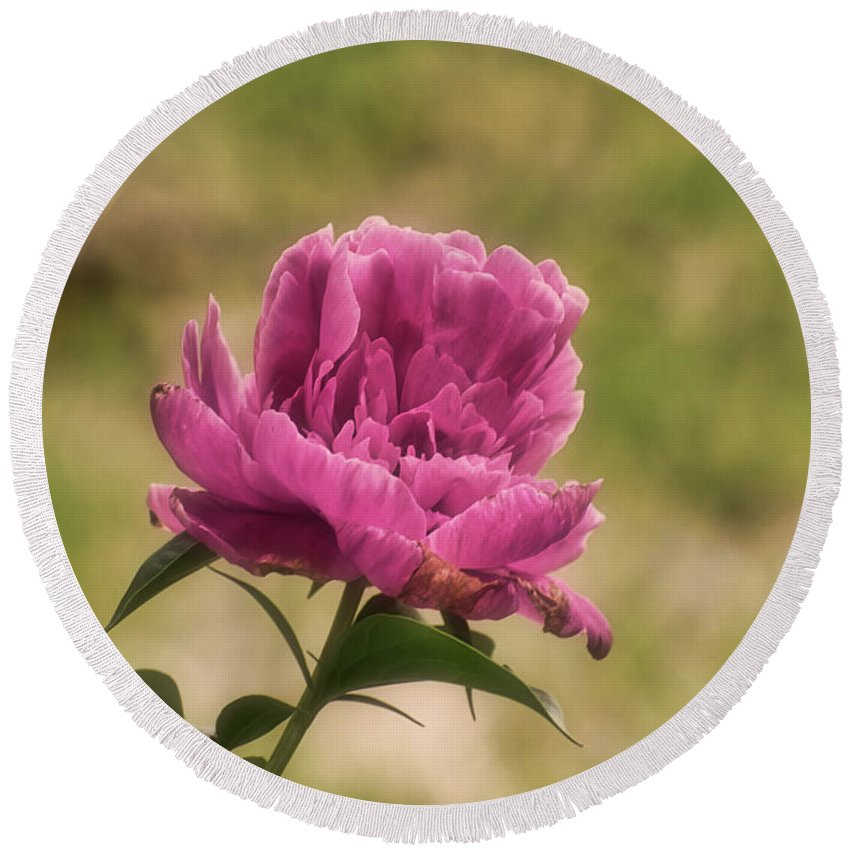 Peony Round Beach Towel featuring the photograph Peony by Robert Brown