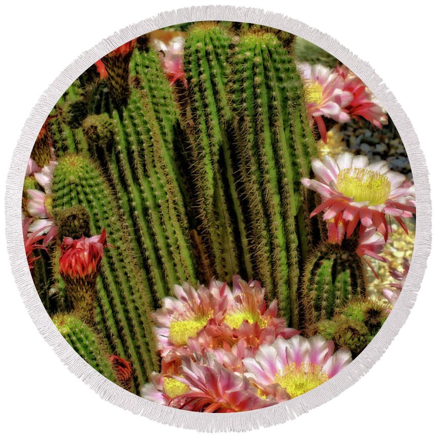 Cactus Round Beach Towel featuring the photograph Pink Cactus Flowers by Jim And Emily Bush