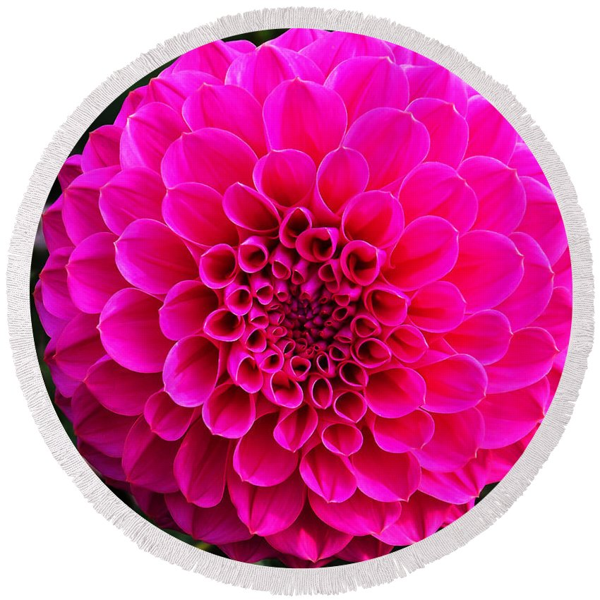 Flower Round Beach Towel featuring the photograph Pink Flower by Anthony Jones